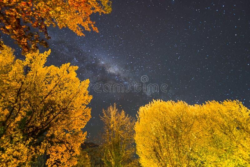 Milky sposób z jesieni ulistnieniem w Queenstown, Południowa wyspa, Nowa Zelandia obraz stock