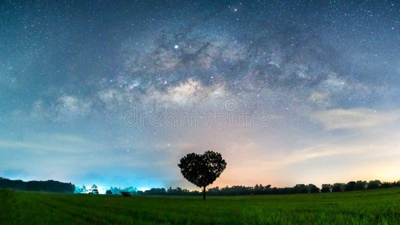 Milky way Galaxy with heart shape tree in paddy fields. Beautiful of Milky way Galaxy with heart shape tree in paddy fields royalty free stock photography