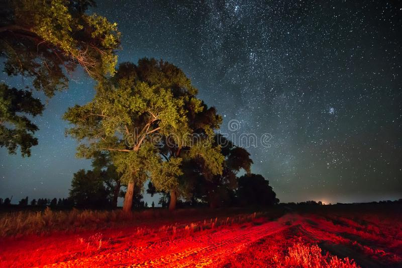 Milky Way Galaxy In Night Starry Sky Above Tree In Summer Forest. Milky Way Galaxy In Night Starry Sky Above Trees In Summer Forest. Glowing Stars Above stock image