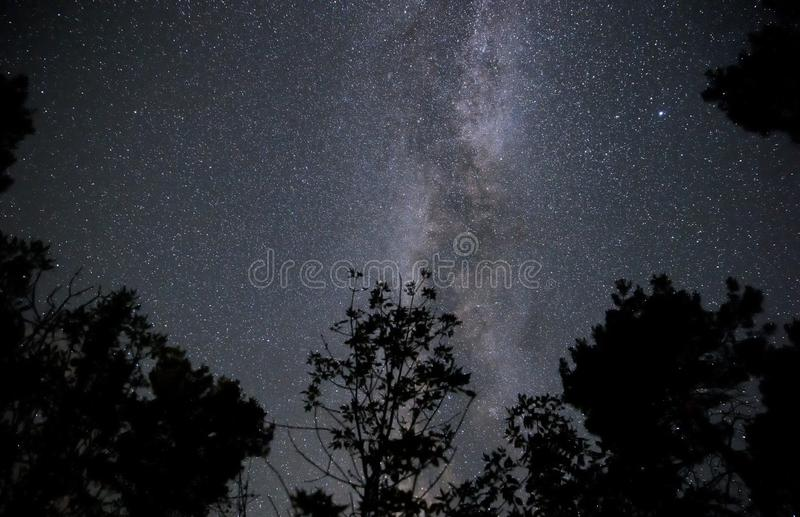 Milky Way in the night sky over the forest stock photo