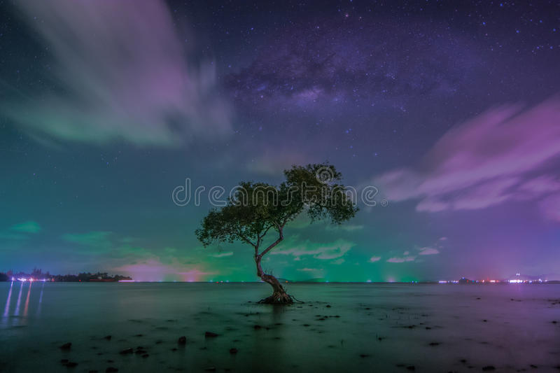 The milky way over big tree on beach in tropical beach with sky. Thailand royalty free stock image