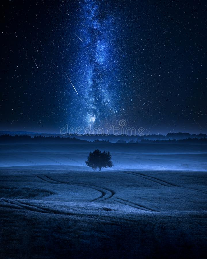 Milky way over filed with one tree in summer. At night royalty free stock photography
