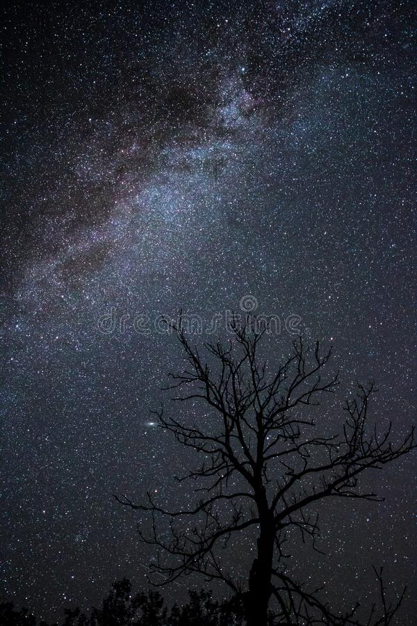 Milky Way over tree. There are more trees on Earth than there are stars in the Milky Way galaxy. Is it true royalty free stock images