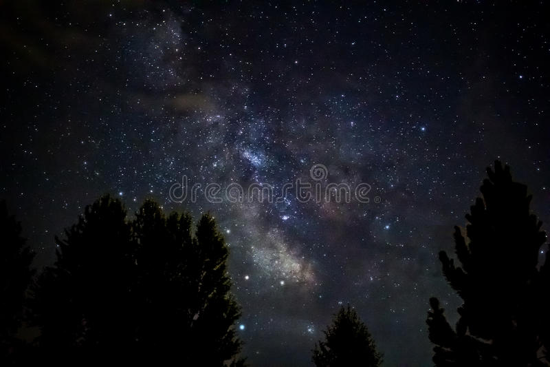 Milky Way Over Tree Tops Free Public Domain Cc0 Image