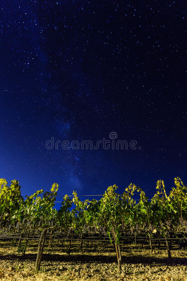 Milky way over vineyards in California's wine country royalty free stock images