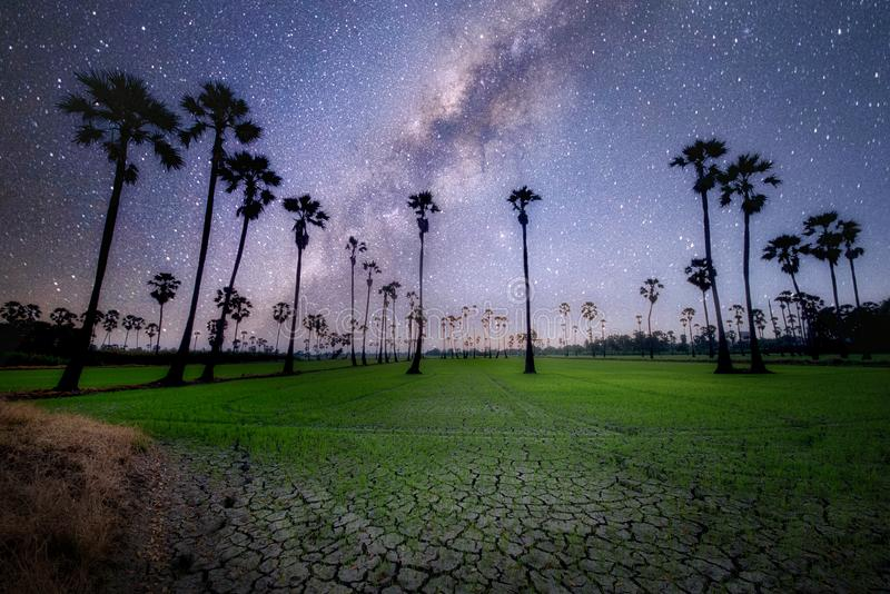 The milky way in the palm tree grove royalty free stock photography