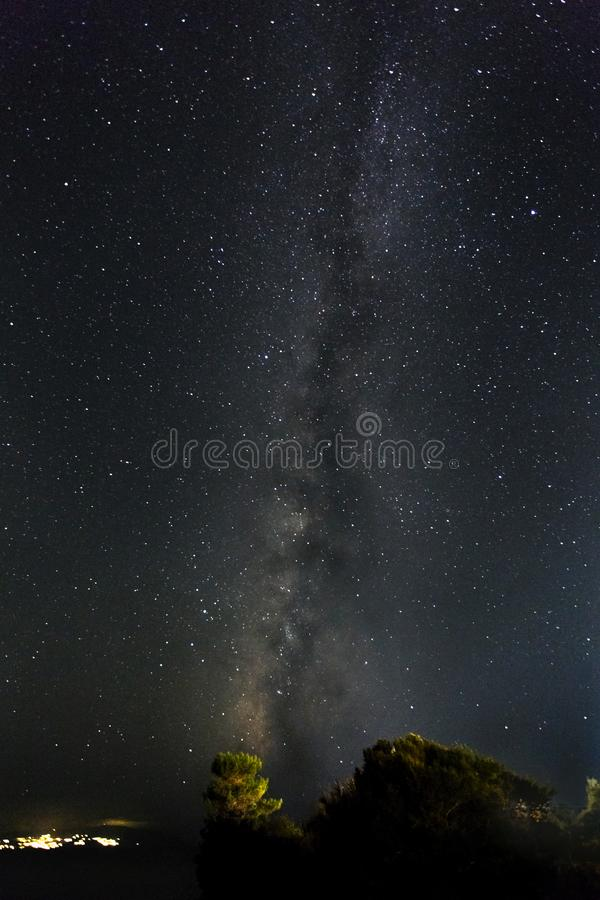 The Milky Way rising up above a lone pine tree royalty free stock photo