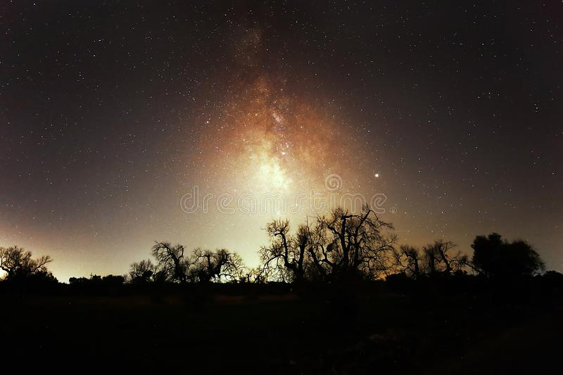Milky way and silhouettes of trees royalty free stock photography