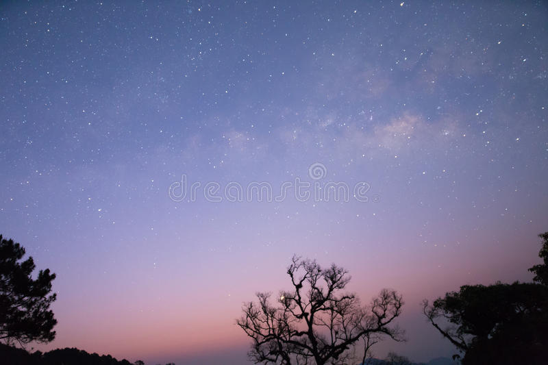 milky way and star with tree silhouette stock images