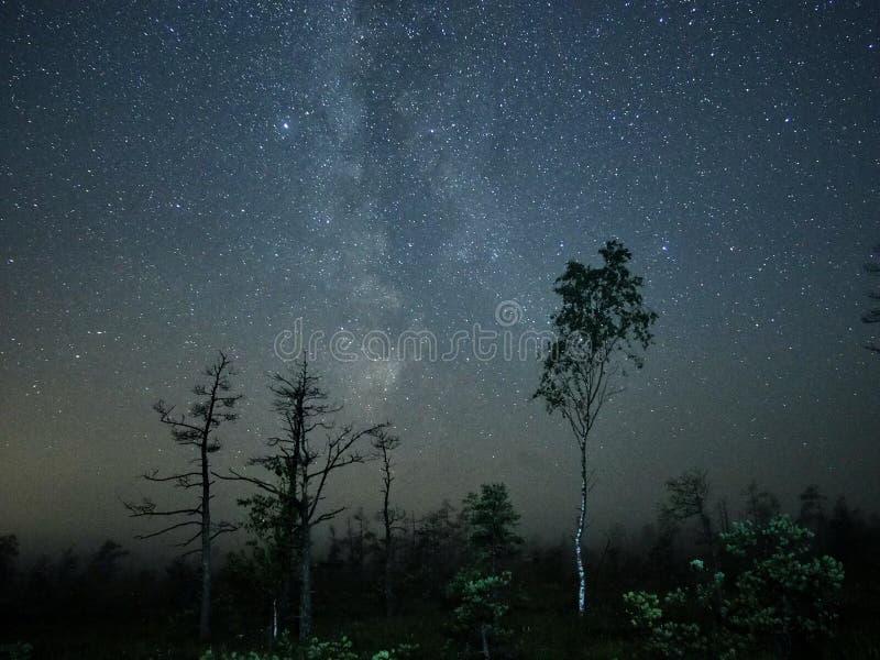 Milky way night sky stars observing over forest. Milky way stars observing over forest stock images