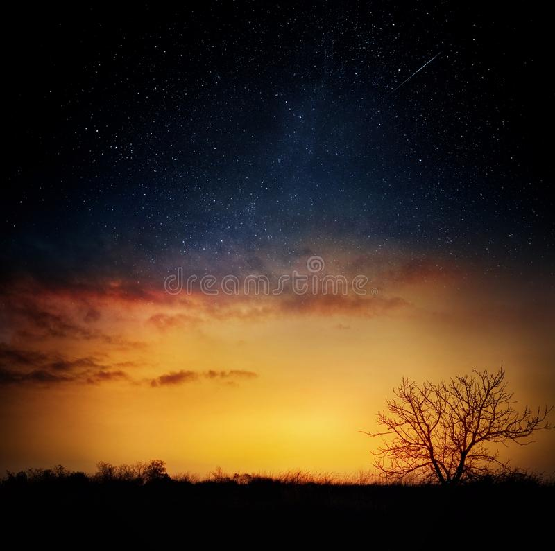 Milky way and stars over night forest. Silhouettes of trees. stock images