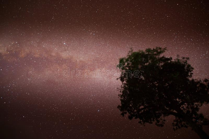 Milky way with tree foreground on clear sky royalty free stock photography