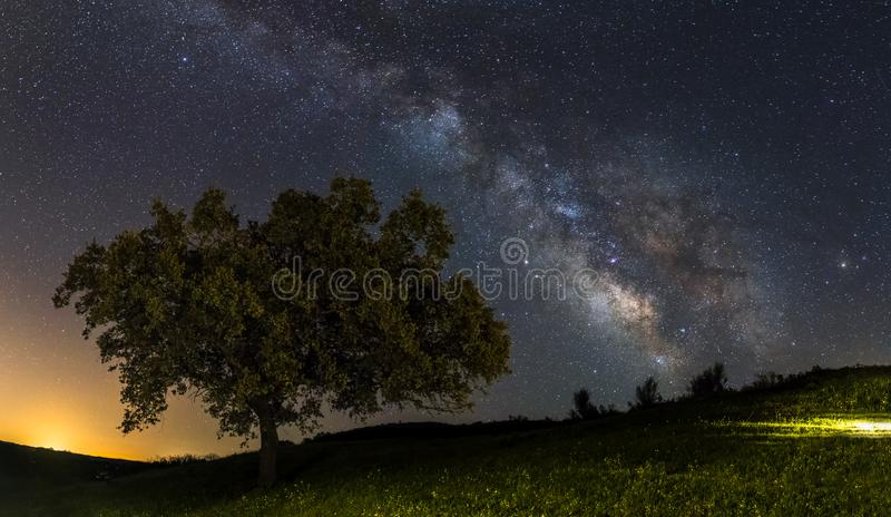 Milky way and the tree royalty free stock image