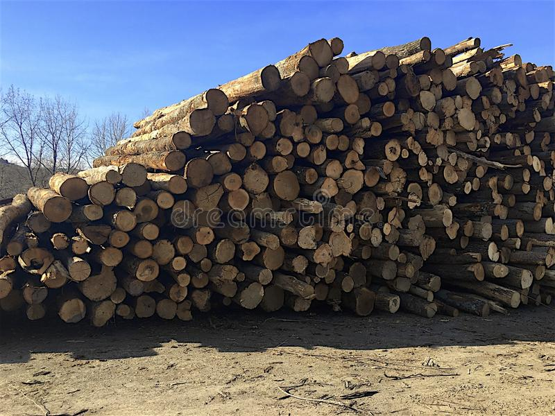 The Mill. Giant pile of stripped trees waiting to be cut into firewood. Blue sky. Wintered, bare trees in the background royalty free stock image