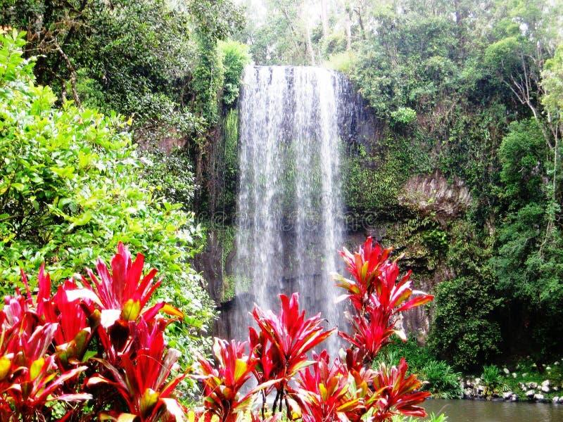 Milla Milla Falls royalty free stock image