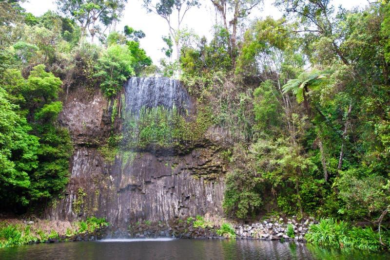 Milla Milla Waterfalls i Atherton högslättar, Queensland, Australien royaltyfri foto