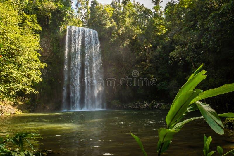 Millaa Milla在夏天下跌在昆士兰,澳大利亚 免版税图库摄影