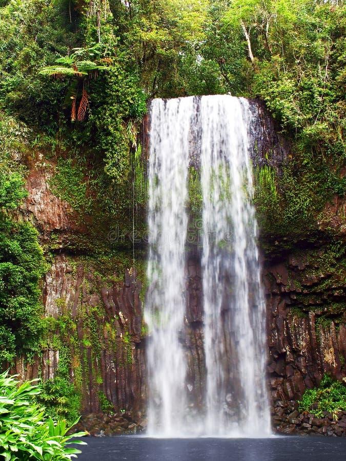 Millaa Millaa Falls royalty free stock images
