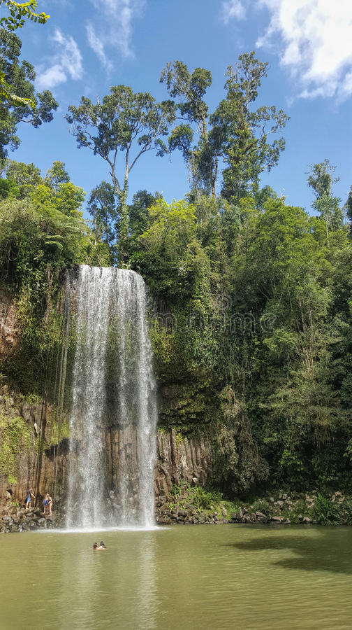 Download Millaa Millaa Falls Is A Heritage-listed Plunge Waterfall Stock Image - Image of water, summer: 98967809