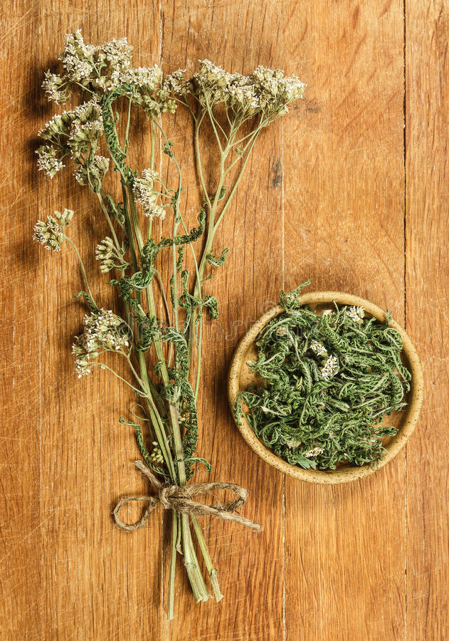 millefeuille Herbes sèches Phytothérapie, médicinal phytotherapy elle photo stock