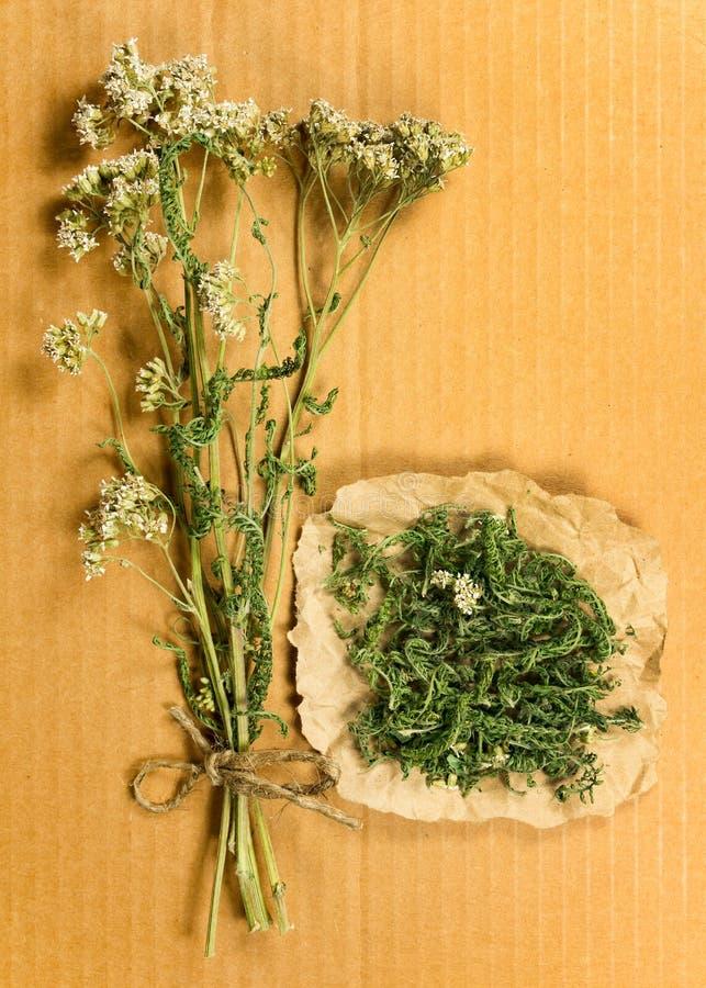 millefeuille Herbes sèches Phytothérapie, médicinal phytotherapy elle image libre de droits
