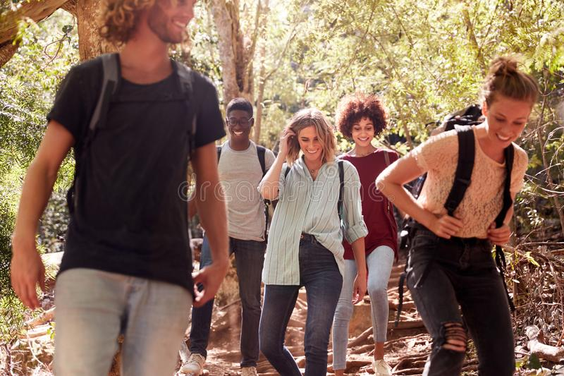 Millennial friends hiking together downhill on a forest trail, three quarter length stock photography