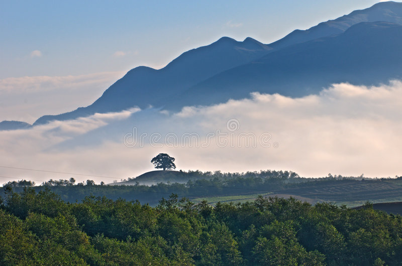 Download Millennium Old Trees Stock Images - Image: 7231514