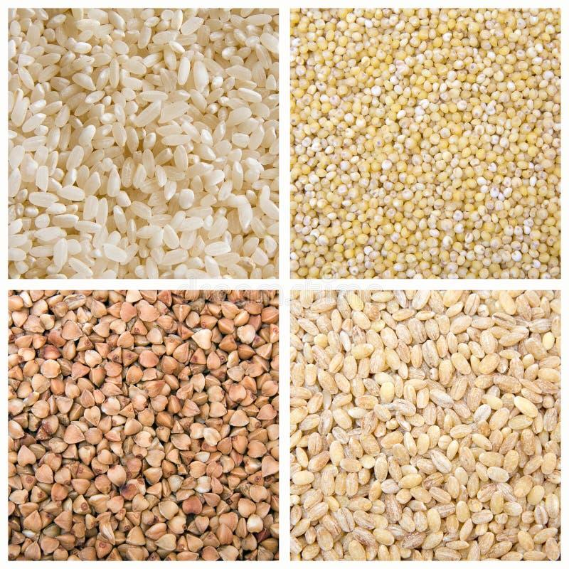 Millet de sarrasin d'orge de riz images libres de droits