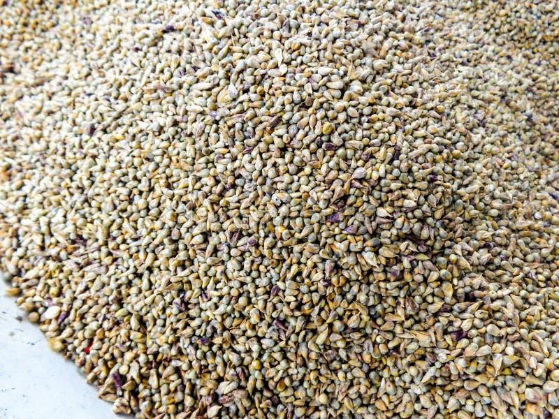 Millet seeds stock image