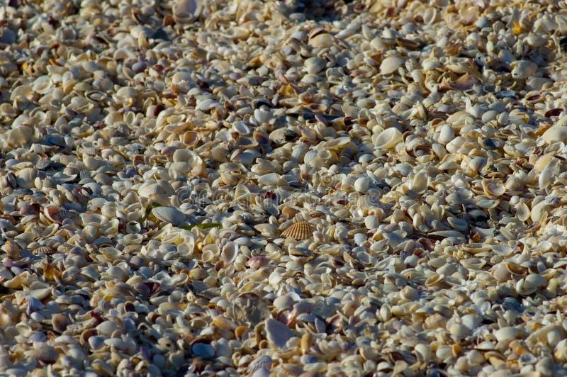 Millions de coquilles de plage image libre de droits