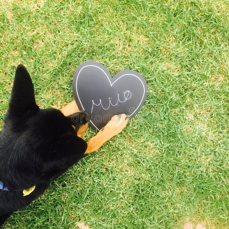 Milo el perro fotografía de archivo
