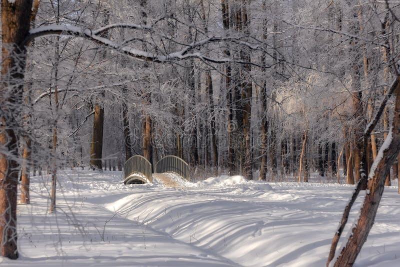 Milou peu de pont dans la forêt d'hiver en Russie Beau paysage d'hiver de nature photo libre de droits
