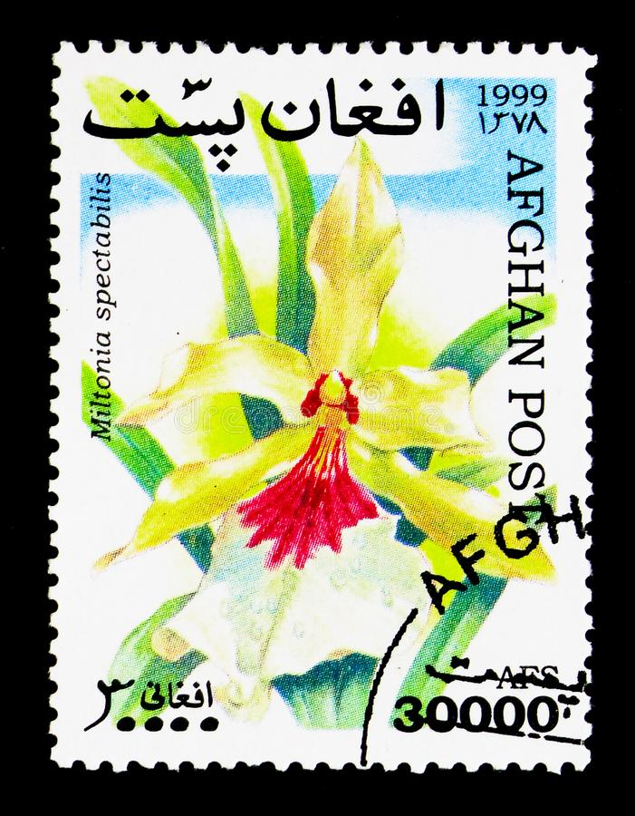 Miltonia spectabilis - Outstanding Miltonia, Orchids serie, circ. MOSCOW, RUSSIA - DECEMBER 21, 2017: A stamp printed in Afghanistan shows Miltonia spectabilis royalty free stock photos