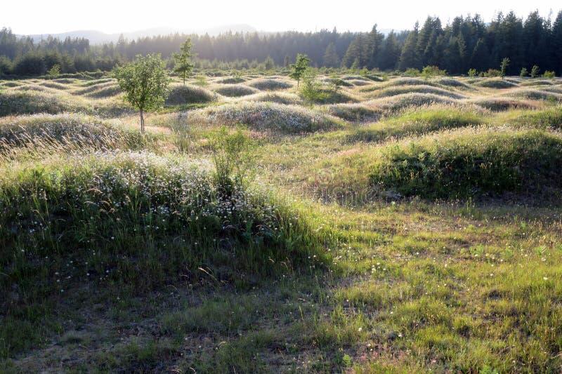Mima Mounds på skymning arkivbilder