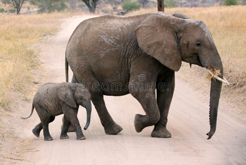 Mime al elefante con el becerro fotografía de archivo libre de regalías
