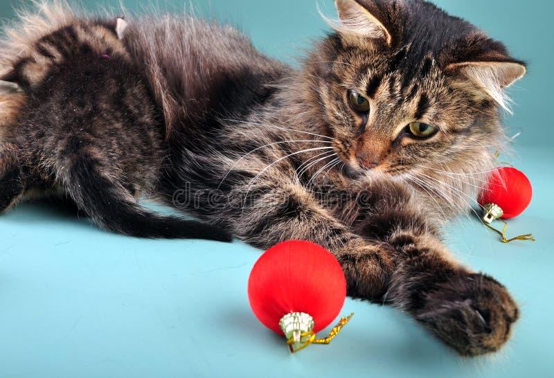 Mime al gato que alimenta su gatito rodeado con la materia de la Navidad fotografía de archivo libre de regalías