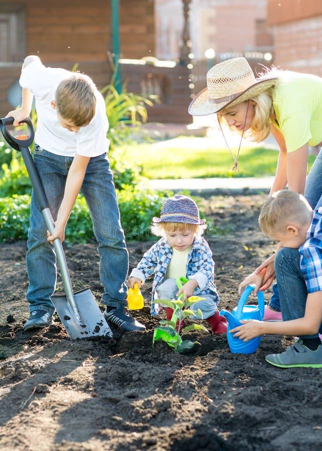 Mime con tres hijos de los niños que plantan un árbol y que lo riegan junto en jardín fotografía de archivo