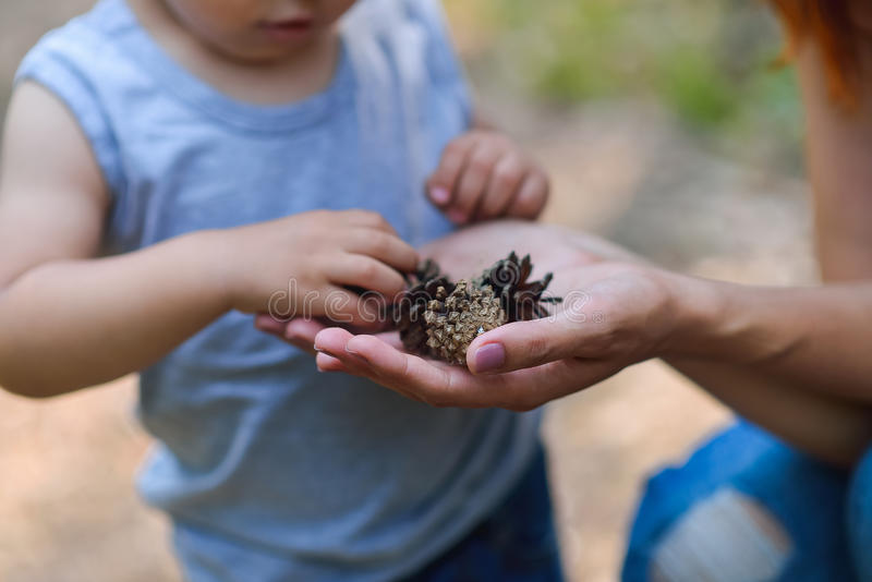 Mime y su pequeño hijo que descubre la naturaleza que mira en conos del pino-árbol, primer foto de archivo libre de regalías
