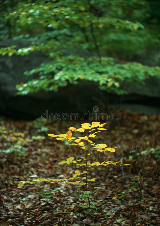 Download Mimicry autumn stock image. Image of forested, scenic - 21603677