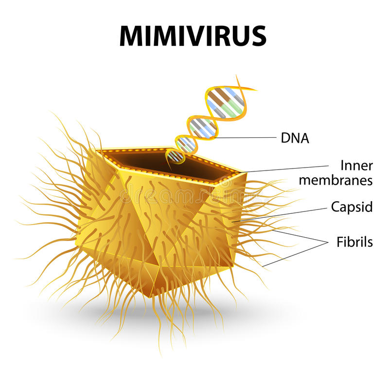 Mimivirus stock illustrationer