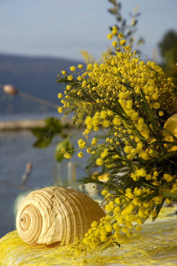 mimosa 10 στοκ εικόνες με δικαίωμα ελεύθερης χρήσης