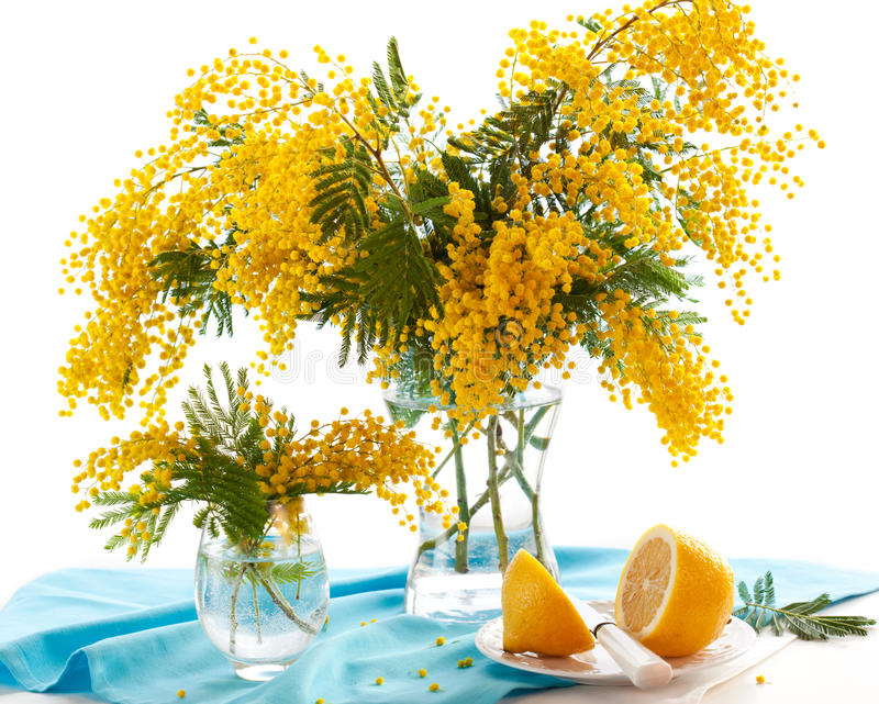 Mimosa. Spring arrangement of mimosa and lemon stock images