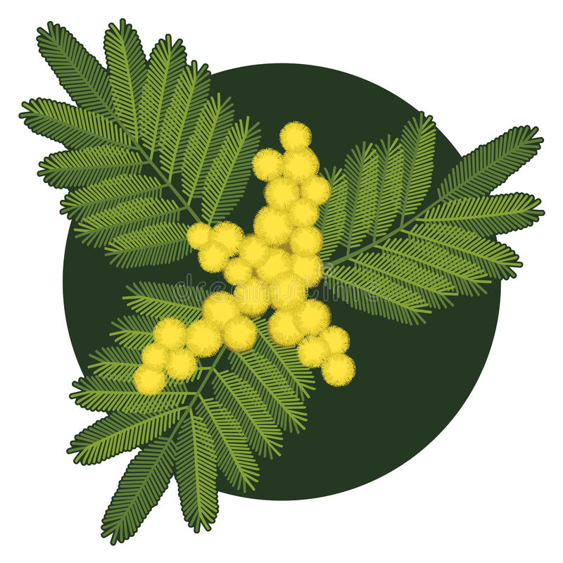 mimosa ilustração royalty free