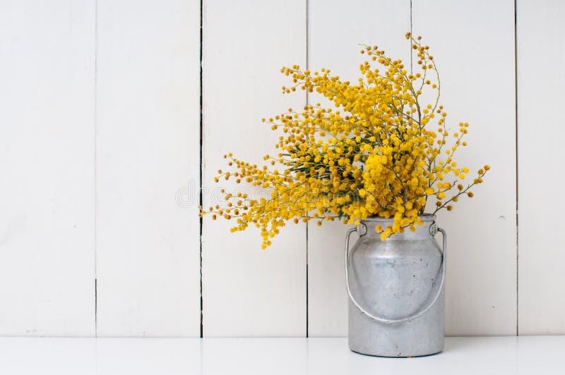 mimosa foto de stock