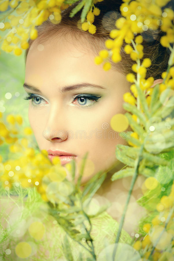 Mimosa amarela imagem de stock