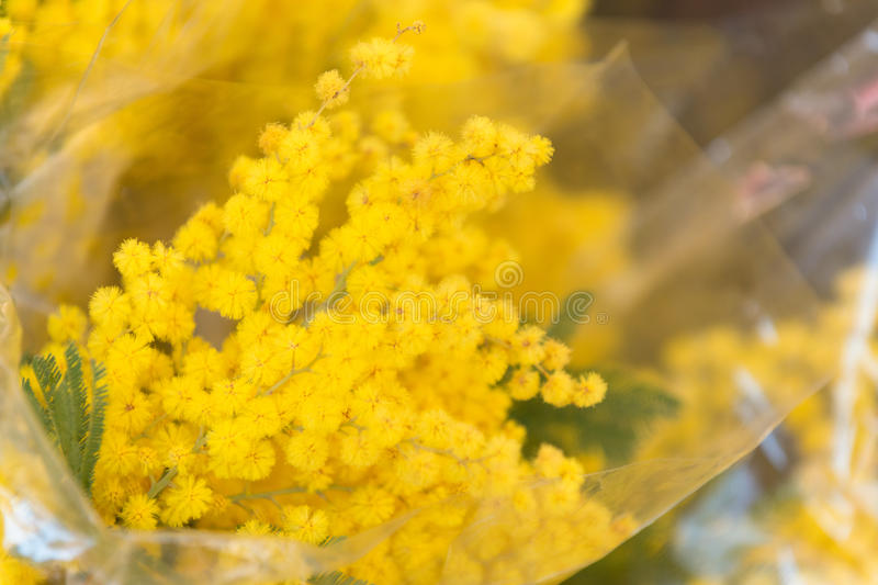 Mimosa. Bouquet in Campo De Fiori famous street market royalty free stock image