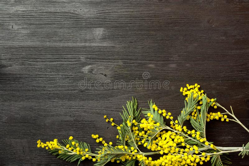 Mimosa branch on table royalty free stock images