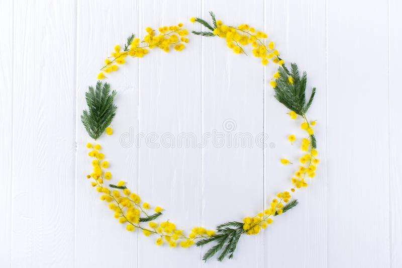 Mimosa circle frame on white background . Space for text. Floral background royalty free stock image