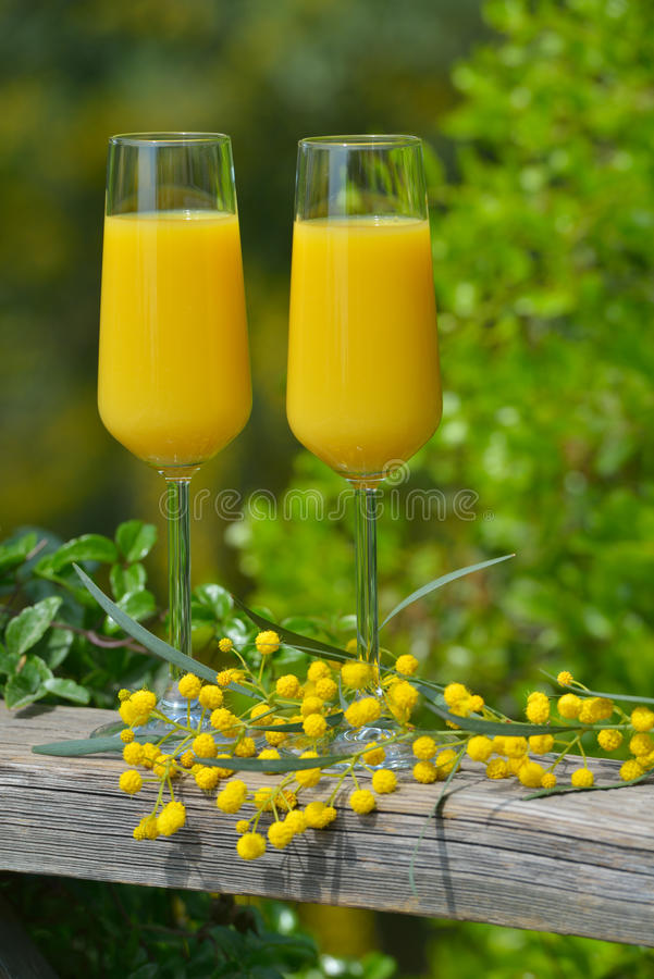 Mimosa cocktail. Two glasses of mimosa cocktail outdoors against lush foliage royalty free stock image
