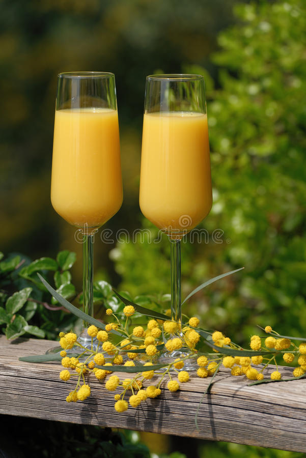 Mimosa cocktail. Two glasses of mimosa cocktail outdoors against lush foliage stock photos